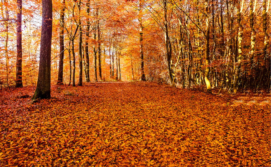 Autumn forest road leaves fall in ground landscape on autumnal background